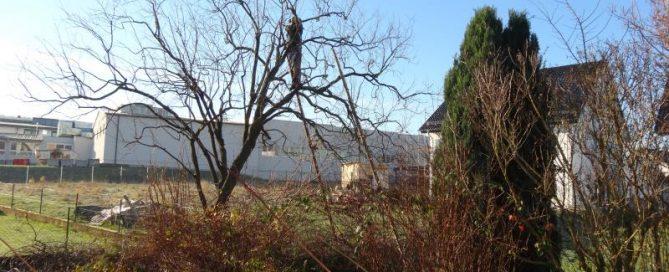 Baumschnitt im Garten