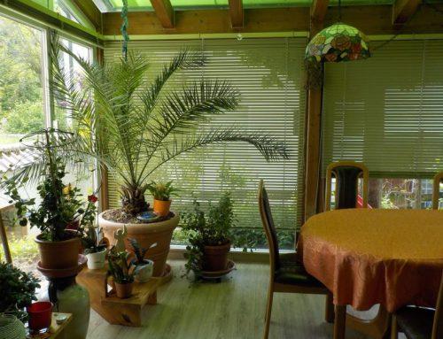 Gelbtafeln & Co.: Hilfe gegen Ungeziefer im Wintergarten